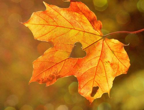 Jak nie popaść w jesienną chandrę?